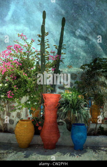 colorful flower pots and plants - Stock Image