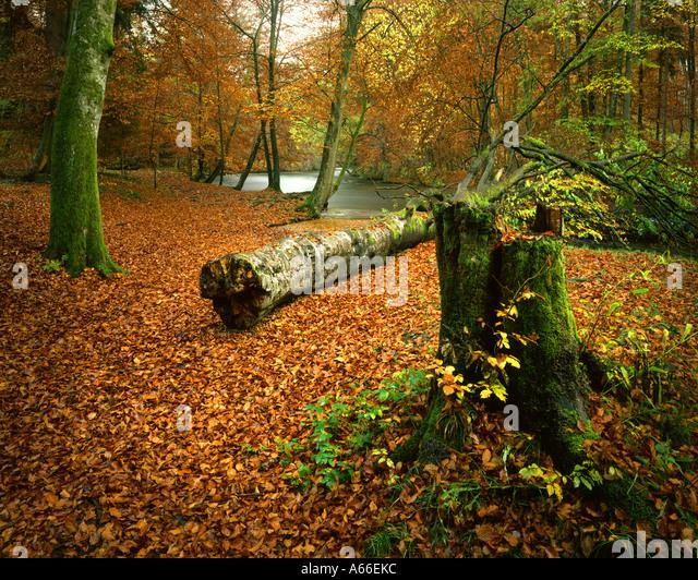 DE - BAVARIA:  Autumn Woods in the Würmtal near Munich - Stock Image