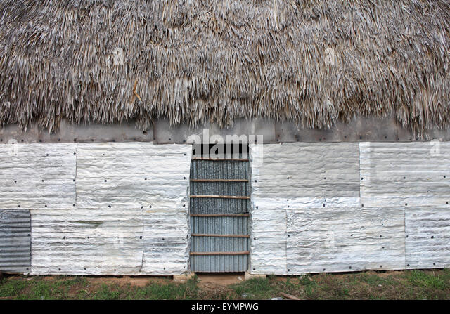 Cuba, tobacco plantation and thatched rural huts in Vinales National Park. UNESCO World Heritage Site. - Stock Image