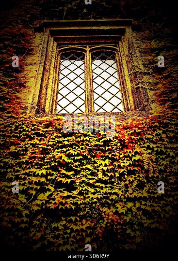 Old window surrounded by ivy (Townely Hall, Burnley) - Stock-Bilder