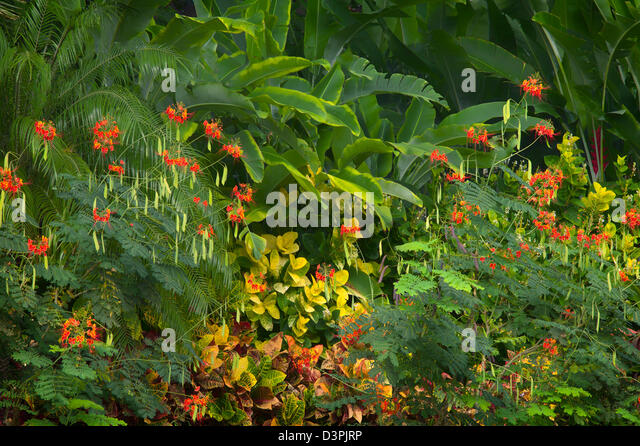 Mixed tropical flowers. Hawaii, The Big Island. - Stock Image