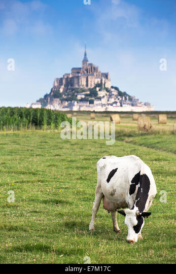Mont Saint Michel bay listed as UNESCO World Heritage, cow in pasture and Mont Saint Michel in the background - Stock-Bilder