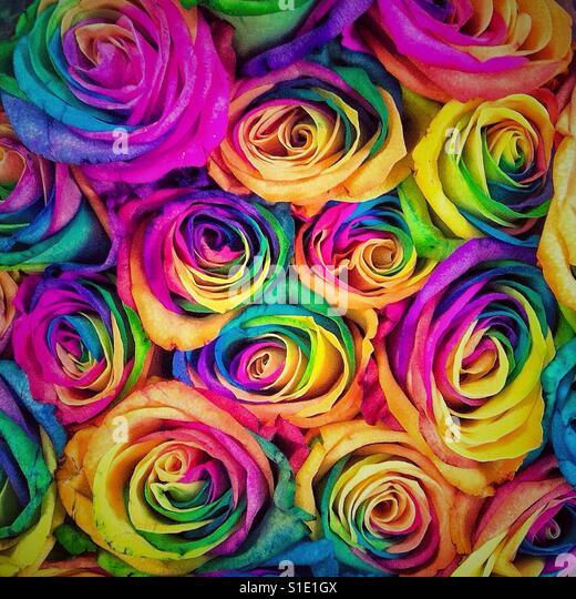 Multicolor roses background - Stock-Bilder