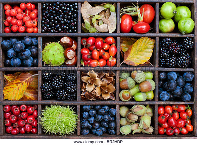 English autumn hedgerow fruit, seeds, berries, leaves and nuts in a wooden tray. Flat lay photography from above - Stock Image