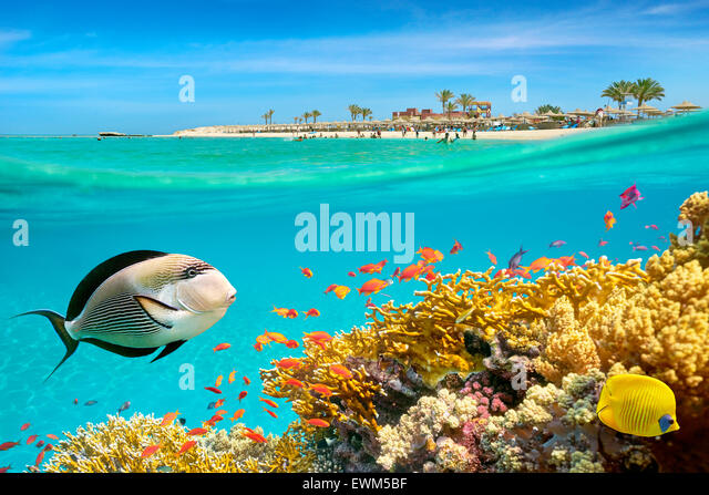 Underwater view at fishes and coral reef, Marsa Alam, Abu Dabbab Bay, Red Sea, Egypt - Stock-Bilder