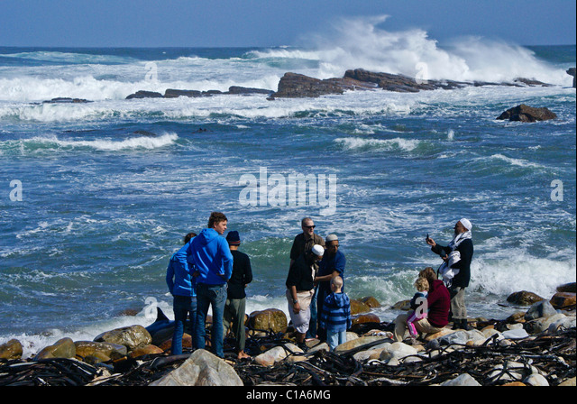 People trying to save beached dolphin, Cape of Good Hope, Western Cape, South Africa - Stock Image