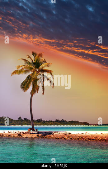 Lonely palm tree in the sea at sunset - Stock Image