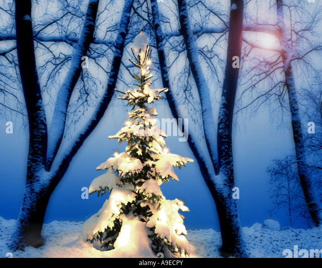 DE - BAVARIA:  Christmas Scene along Lake Kochel - Stock Image