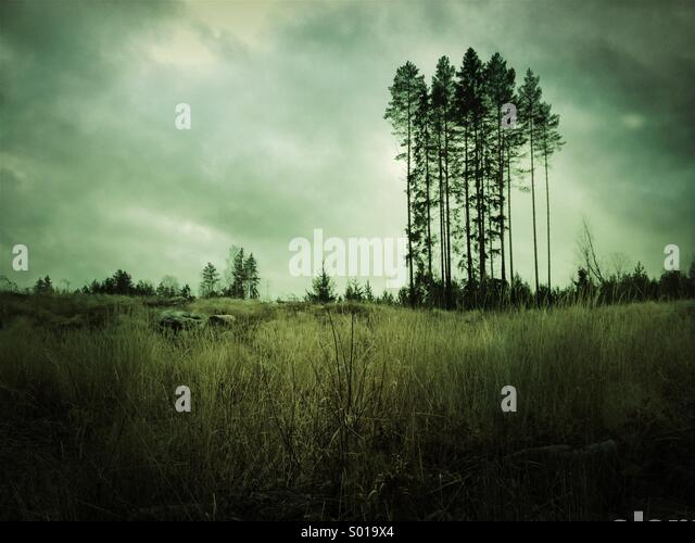 Lone group of trees standing amid deforestation in Sweden. - Stock Image