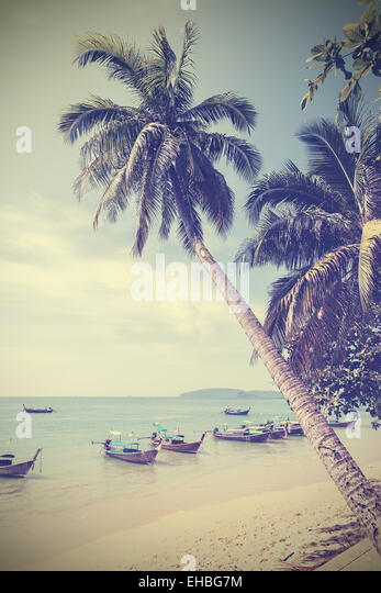Vintage toned palm trees on a beach, summer background. - Stock Image