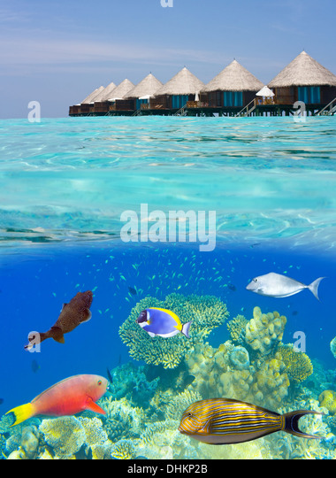 Water villas and the underwater world - Stock-Bilder