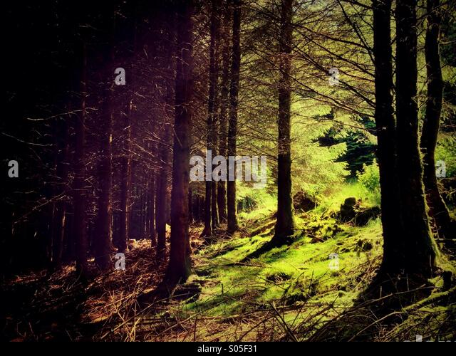 Light and shade in forest - Stock Image