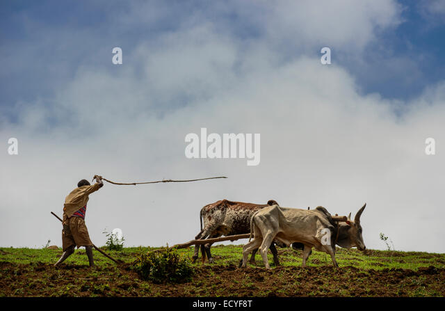 A Tigrayan man working in his field, Simien Mountains, Ethiopia - Stock Image