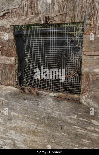 Mesh covered window grille of chicken / hen coup. - Stock Image