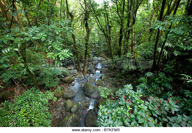 El Yunque National Forest, Puerto Rico - Stock Image