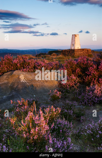 Heather By Trig Point At Cloudside Cheshire UK - Stock Image
