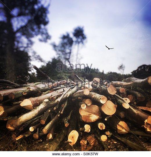 Felled Trees - Stock Image