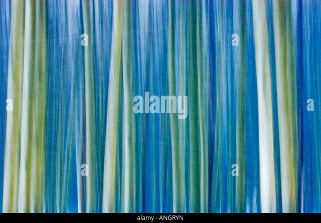 Abstract of trees, Banff National Park, Alberta, Canada. - Stock Image