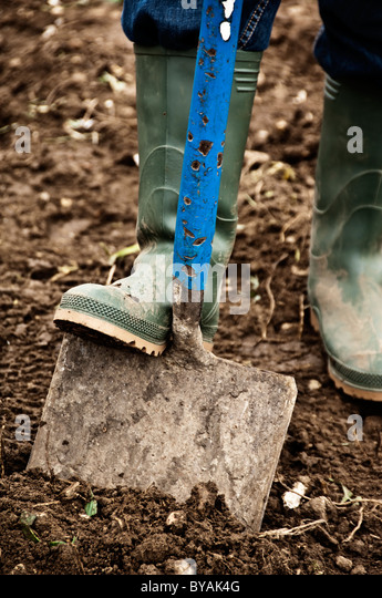 digging with a spade - Stock Image