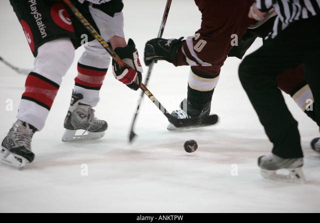 face off action from Dundalk Bulls v Concordia Stingers friendly exhibition game at the Dundalk Ice Bowl Dundalk - Stock Image