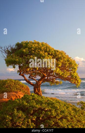 Nukoli'i Beach, also known as Kitchens Beach, Kauai, Hawaii. - Stock-Bilder