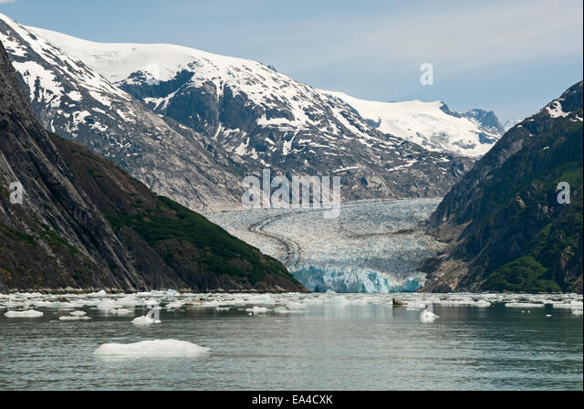 Seal,Iceberg,Alaska,Mountain,Endicott Arm - Stock Image