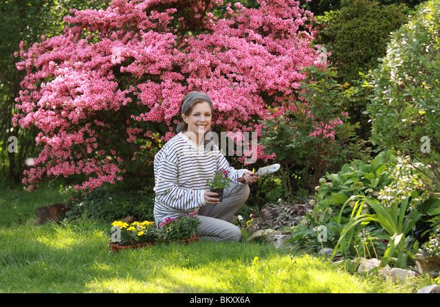 azalea single mature ladies Premium mature azalea royal command, a deciduous exbury azalea with large, impressive pink fragrant flowers that bloom in may - june.