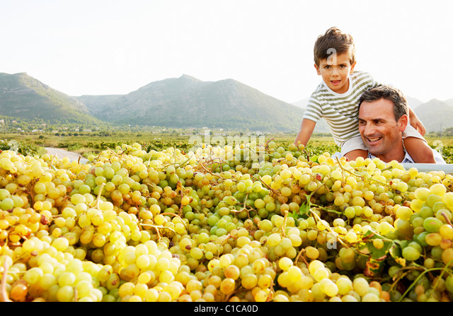 Father and son looking at pile of grapes - Stock Image