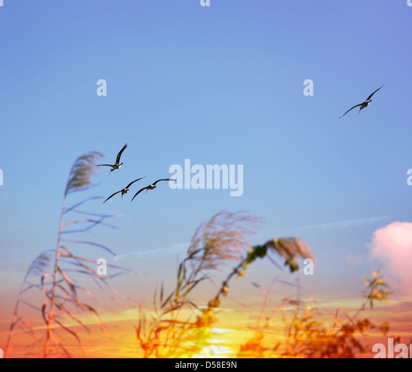 Tropical Birds Flying At Sunset - Stock Image