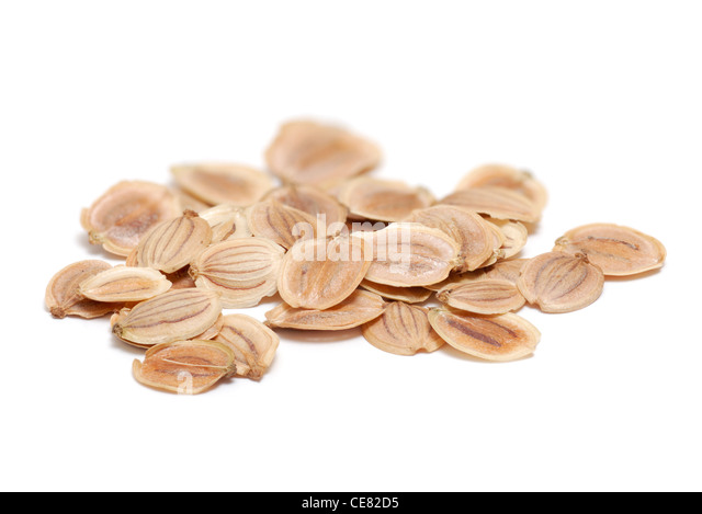 Parsnip seeds on white - Stock Image