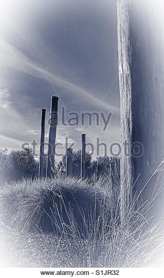 wooden Poles - Stock Image
