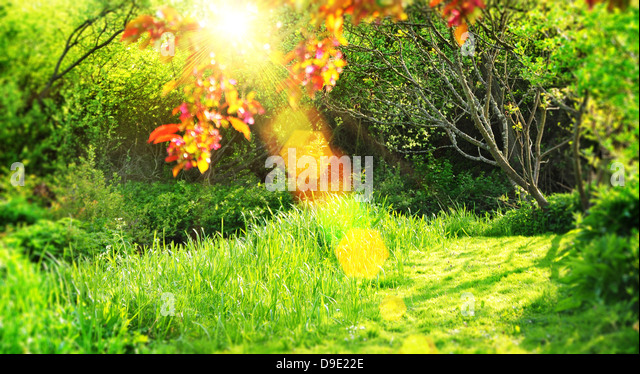 summer sunshine rays - Stock Image