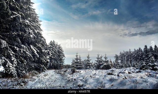 beautiful winter landscape in woods - Stock Image