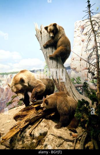 Natural History Museum Sugar Land