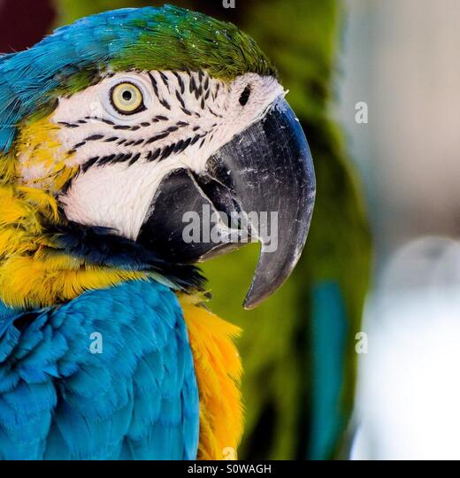 Parrot in zoo - Stock Image