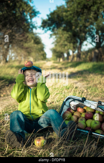 Germany, Saxony, Boy sitting with basket full of apples - Stock Image