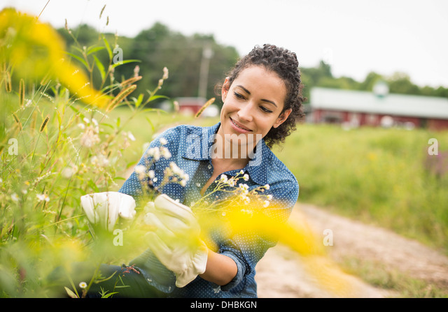 Working on an organic farm. - Stock Image