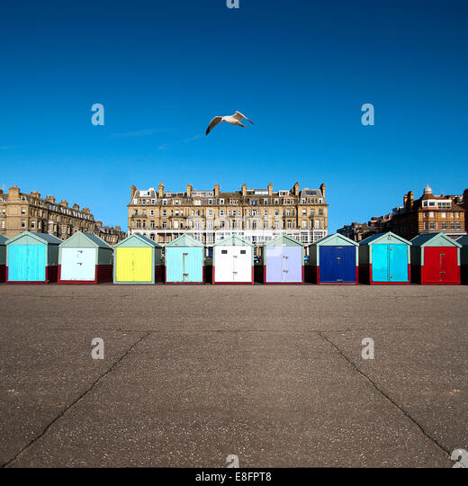 Multi-colored row of beach huts, Brighton, England, UK - Stock Image