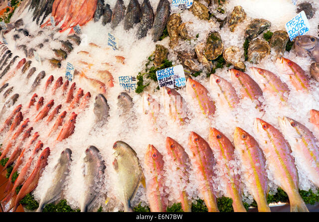 Doctor fish stock photos doctor fish stock images alamy for Doctor fish for sale