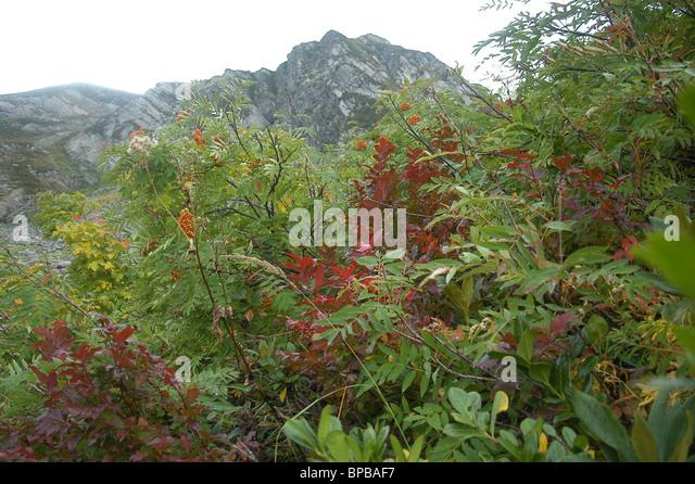 Views of Krasnaya Polyana (Red Glade) environs - Stock Image