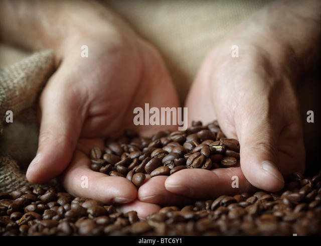 Hand holding coffee beans - Stock Image