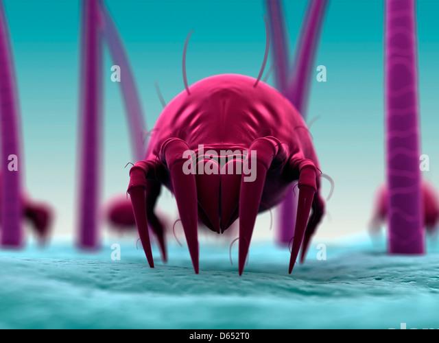 Dust mite, artwork - Stock Image