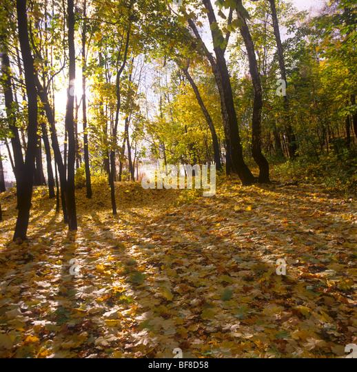 The paints of autumn. - Stock-Bilder
