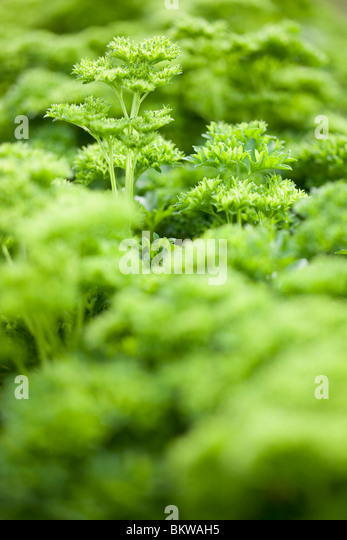 Green ocean of vegetation - Stock Image