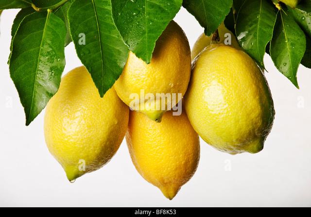Bunch of fresh lemons on white background - Stock Image