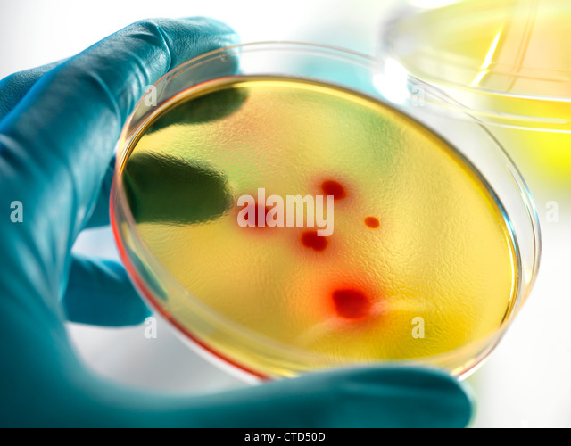 Bacteria research - Stock Image