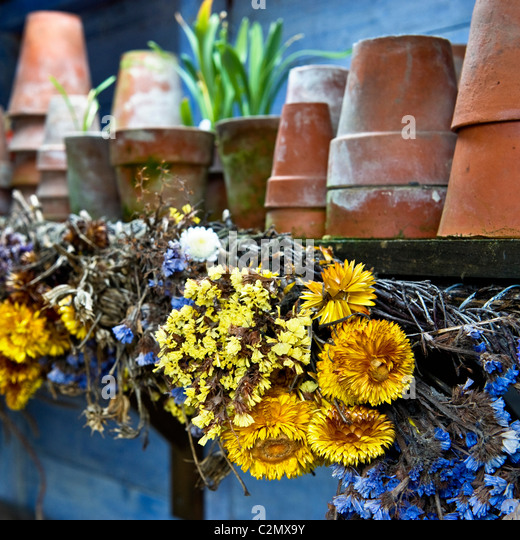 Dried Flowers in Old Potting Shed - Stock Image