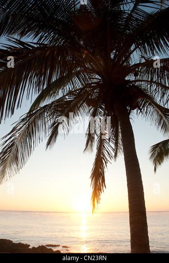 Palm tree on beach, Tulum, Mexico - Stock Image