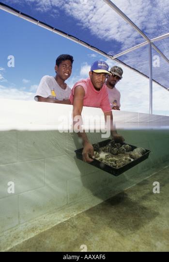 Clam Farmers in aquaculture farm split image - Stock Image