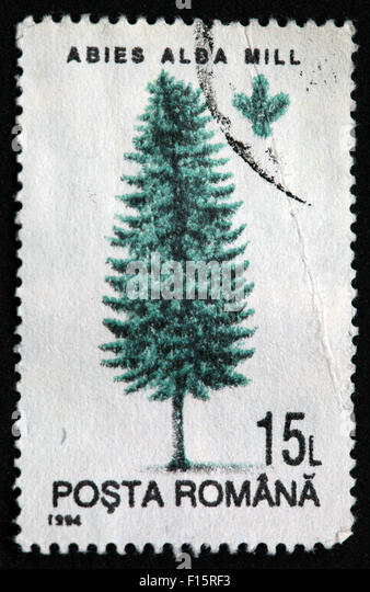 Posta Romana 15L Abies Alda Mill tree stamp - Stock Image